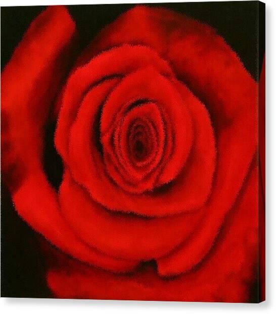 Irises Canvas Print - Velvet Rose by Mandi Ward