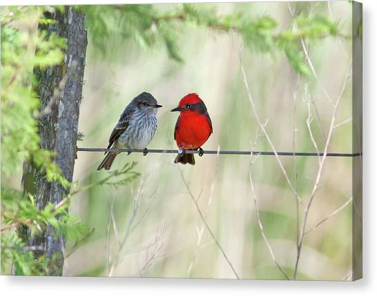 Flycatchers Canvas Print - Vermilion Flycatcher In Love by Edith Polverini