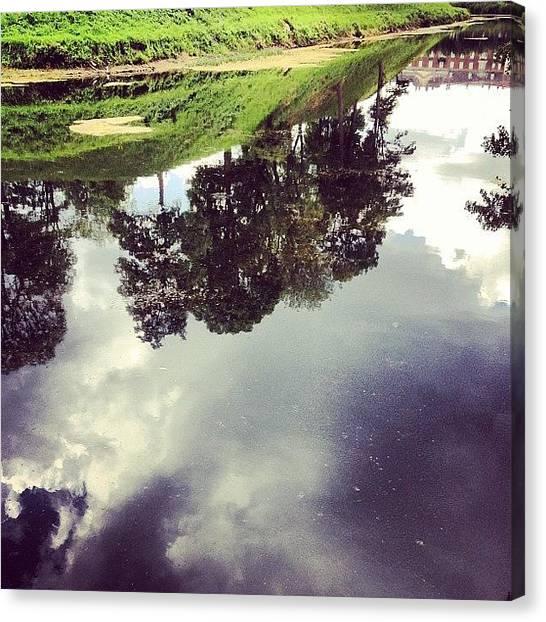 Vertigo Canvas Print - #vertigo #water #tree #instahub by Noa Steinberger