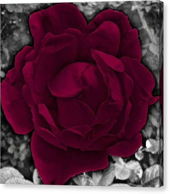 Berries Canvas Print - Vibrant Rose by Christine Cherry