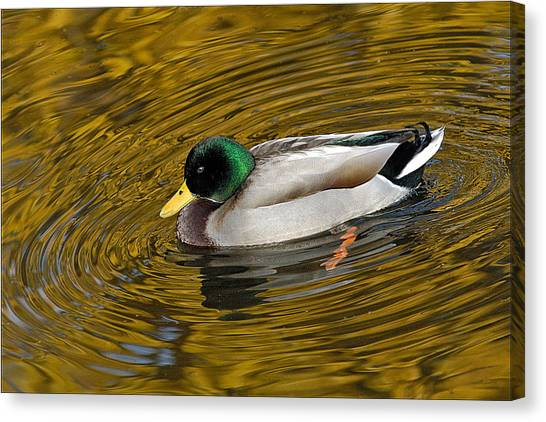 Vibrating Mallard Canvas Print by Howard Knauer