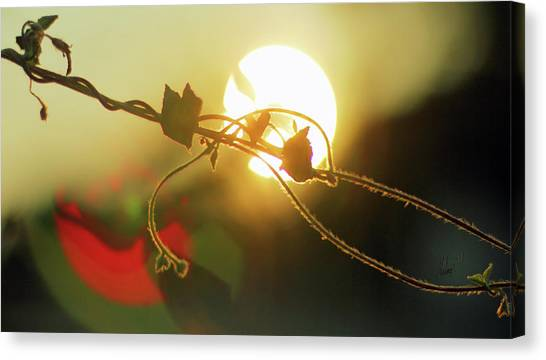Vine Light Canvas Print