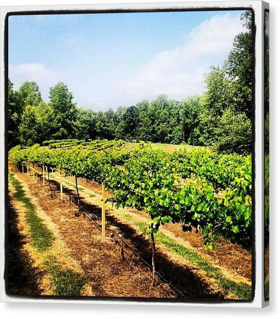 Farmers Canvas Print - #vineyard #backyard #grapes #vines by Virginia Lockman