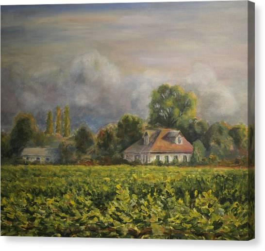 Vineyard Fog Santa Rosa Canvas Print