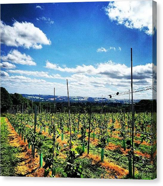 Vineyard Canvas Print - #vineyard #grapes #wine #view #scenery by Jake Delmonte