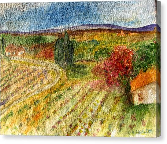 Vineyard In Provence Canvas Print