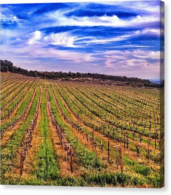 Grapes Canvas Print - Vineyard Views High Above #napavalley by Peter Stetson