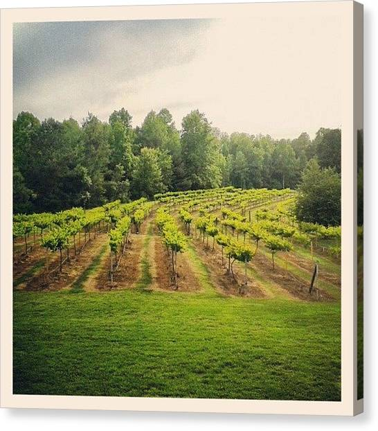 Juice Canvas Print - #vineyard #vines #rows #grapes #grow by Virginia Lockman