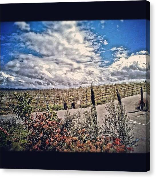 Vineyard Canvas Print - #vineyard #wine #winery #temecula by Skip Jensen