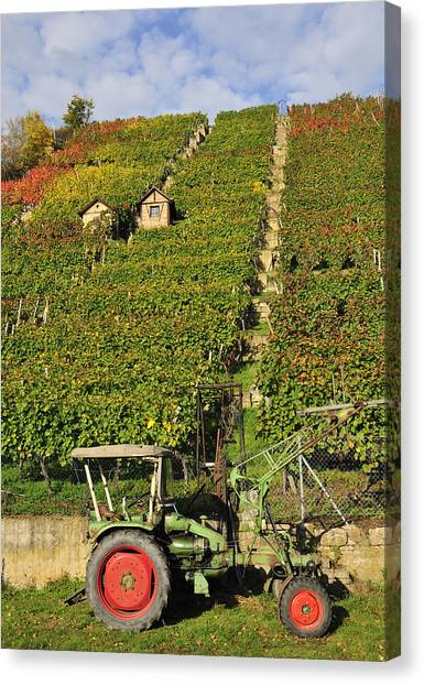 Baden Wuerttemberg Canvas Print - Vineyard With Tractor by Matthias Hauser