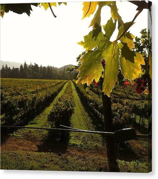 Vineyard Canvas Print - #vineyards At #sunset At by Crystal Peterson