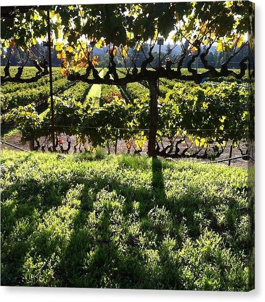 Winery Canvas Print - #vineyards At #sunset by Crystal Peterson