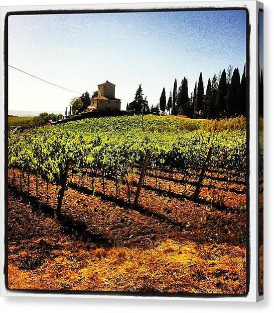 Vineyard Canvas Print - Vineyards by Fabrizio Morviducci