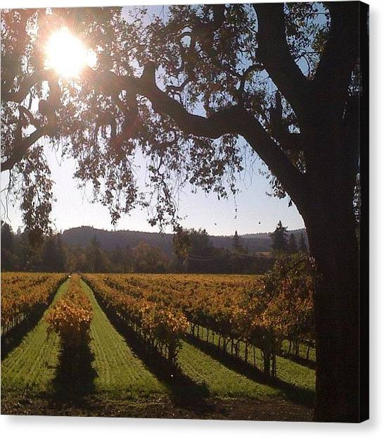 Vineyard Canvas Print - Vineyards In The Fall by Crystal Peterson
