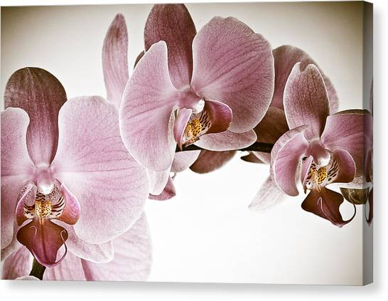 Canvas Print featuring the photograph Vintage Orchid by  Onyonet  Photo Studios