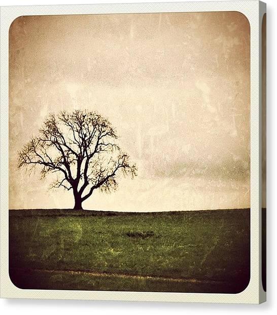 Soda Canvas Print - Vintage Tree by Soda Love