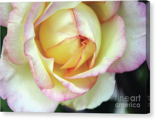 Virgin Beauty Canvas Print