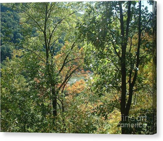 Virginia Walk In The Woods Canvas Print
