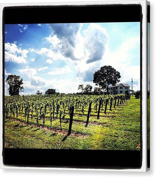Winery Canvas Print - Visit To Hume Vineyard In Va by Aisha Mahy