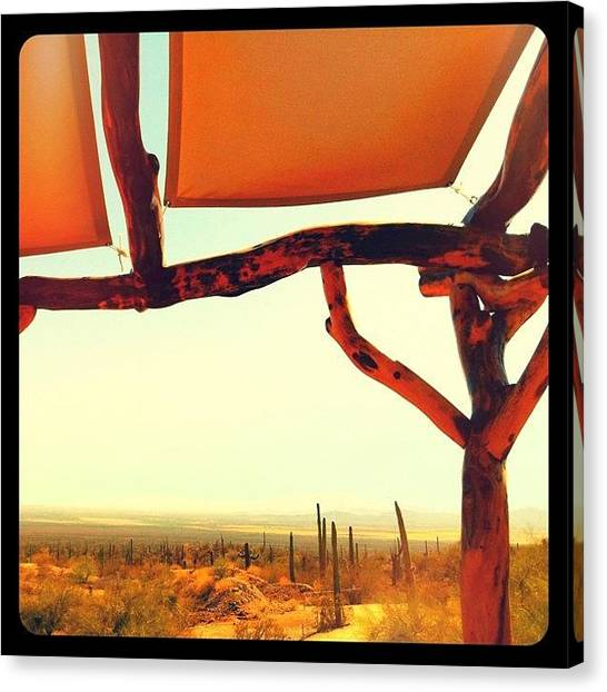 Sonoran Desert Canvas Print - Vista by Kim Hudson
