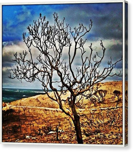 Ashes Canvas Print - Wa Fires #fire #ash #tree #burn #blaze by Luke Fuda