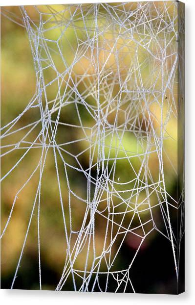 Wacky Winter Web Canvas Print