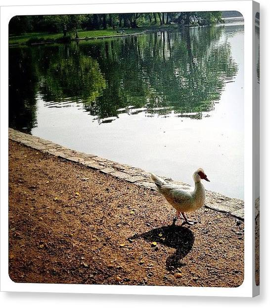 Birds Canvas Print - Waddle By The Water by Natasha Marco