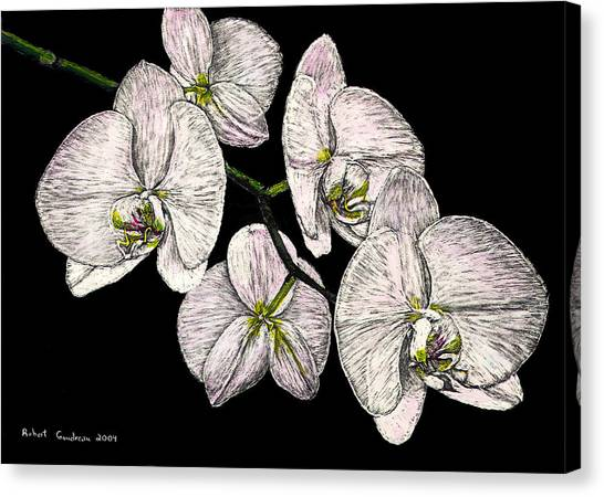 Wade's Orchids Canvas Print by Robert Goudreau