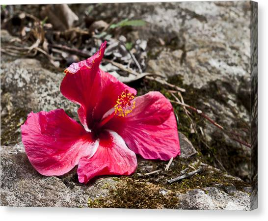 Waihe'e Hibiscus Canvas Print