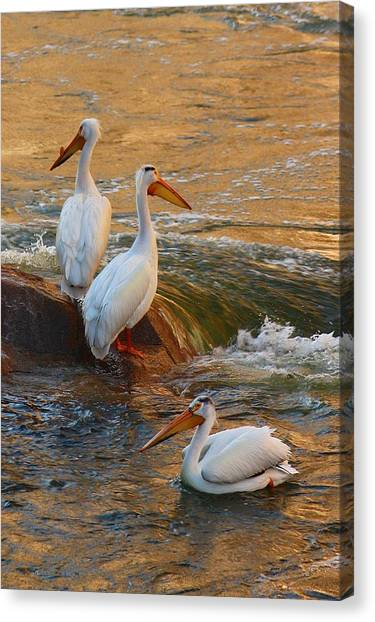 Waiting For Dinner Canvas Print by Richard Stillwell