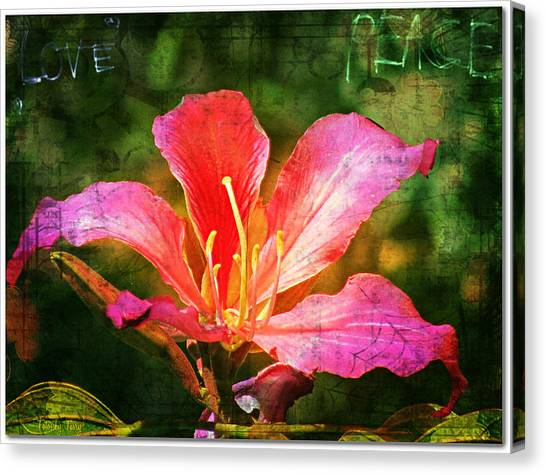Waiting For My Orchid Tree To Bloom Canvas Print