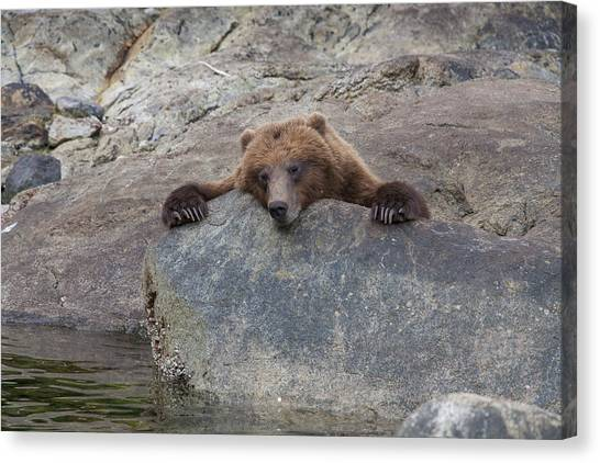 Bear Claws Canvas Print - Waiting For The Salmon by Tim Grams