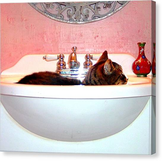 Manx Cats Canvas Print - Waiting For Water by Kathleen Horner