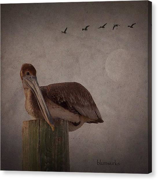 Iger Canvas Print - Waiting by Matthew Blum