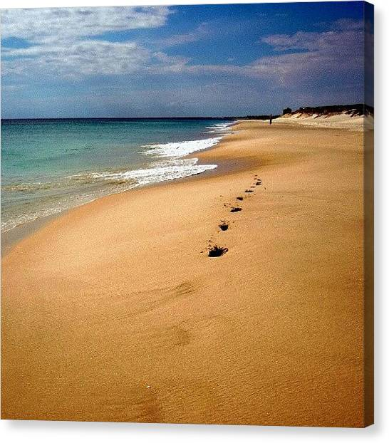 Ocean Animals Canvas Print - Walkabout by Dave  Cassidy