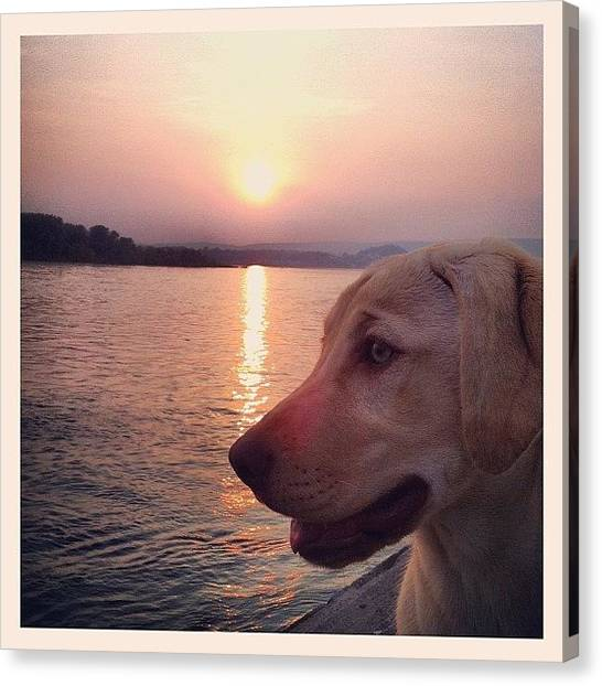 Yellow Lab Canvas Print - Walking Along The River.  by Jordan Roberts