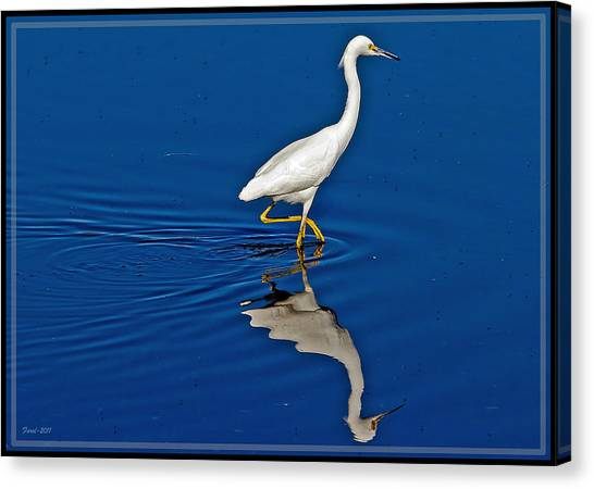 Walking Egret Canvas Print