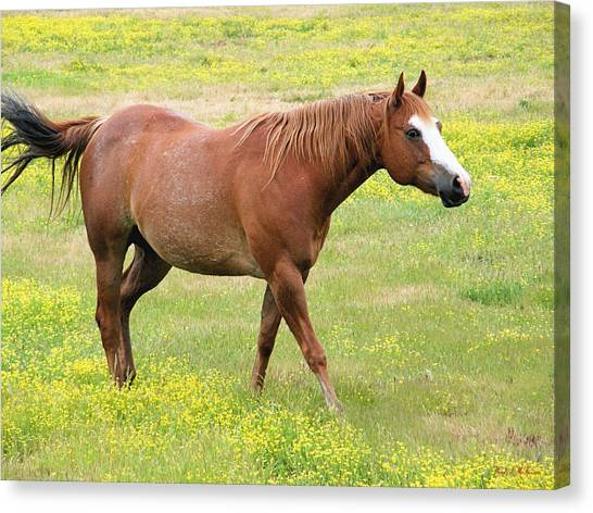 Walking Horse Canvas Print
