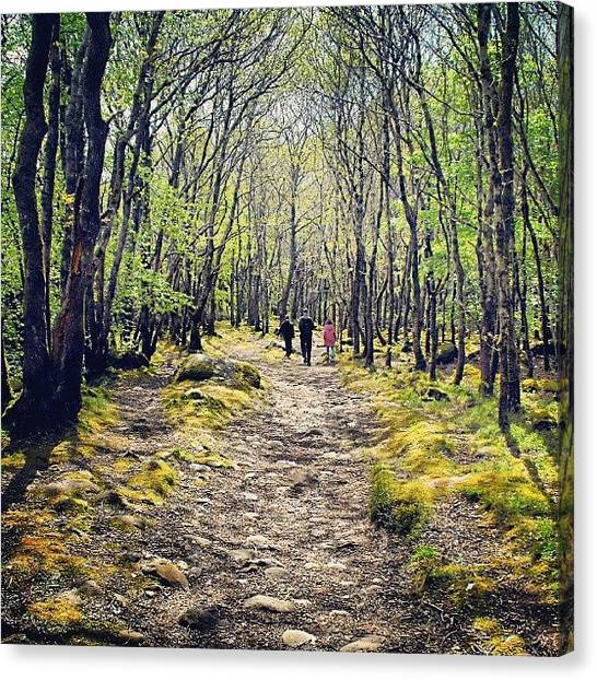 Forest Paths Canvas Print - #walking Near #talybont, #barmouth by Alexandra Cook