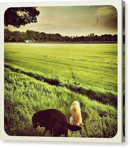 Hot Dogs Canvas Print - Walking The #dogs Early This Morning by Wilbert Claessens
