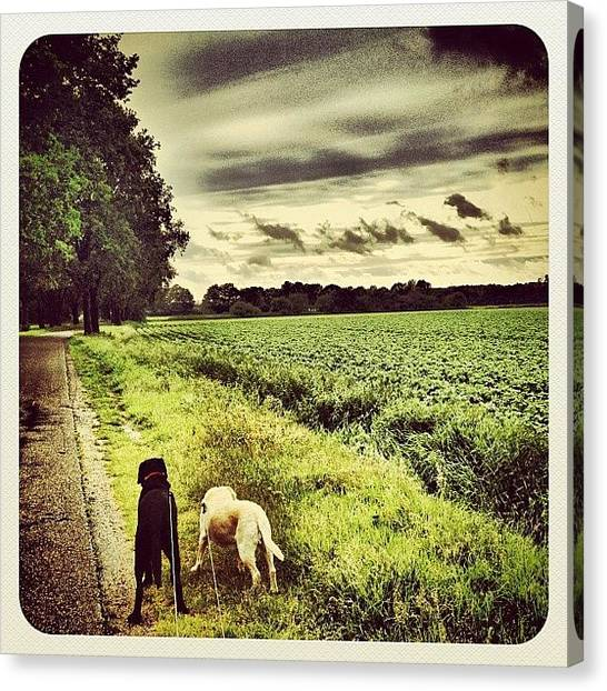 Hot Dogs Canvas Print - Walking The #dogs In The #rain by Wilbert Claessens