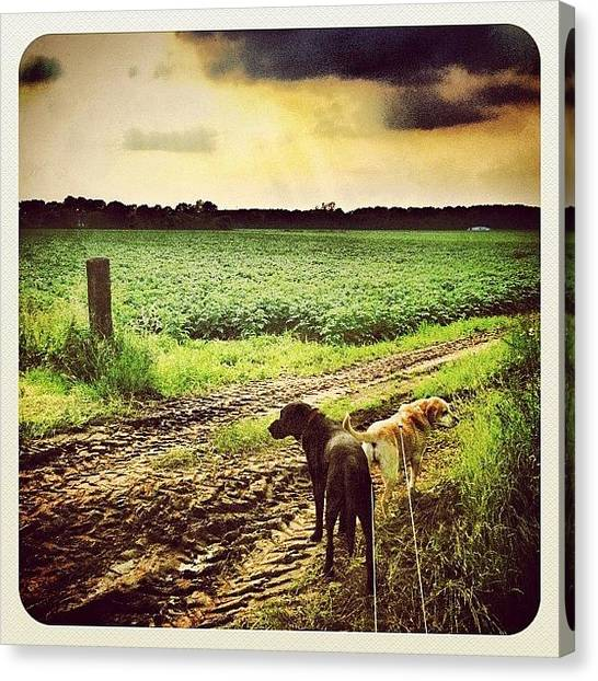 Hot Dogs Canvas Print - Walking The #dogs by Wilbert Claessens
