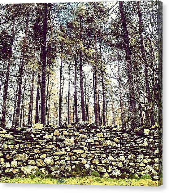 Forest Canvas Print - Wall And Forest In Cumbria by Nic Squirrell