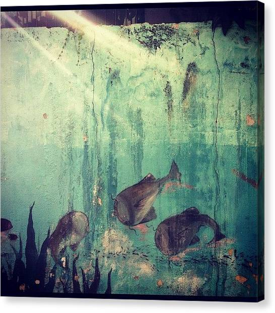 Korean Canvas Print - Wall Art. 🐠🐟 by Roxanne Soko