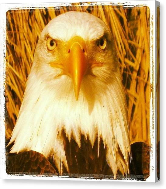 Hunting Canvas Print - Warm Eagle by Tony Benecke