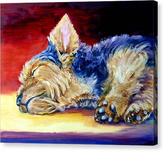 Yorkshire Terrier Canvas Print - Warm Spot - Yorkshire Terrier by Lyn Cook