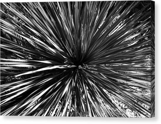 Warp Speed  Canvas Print