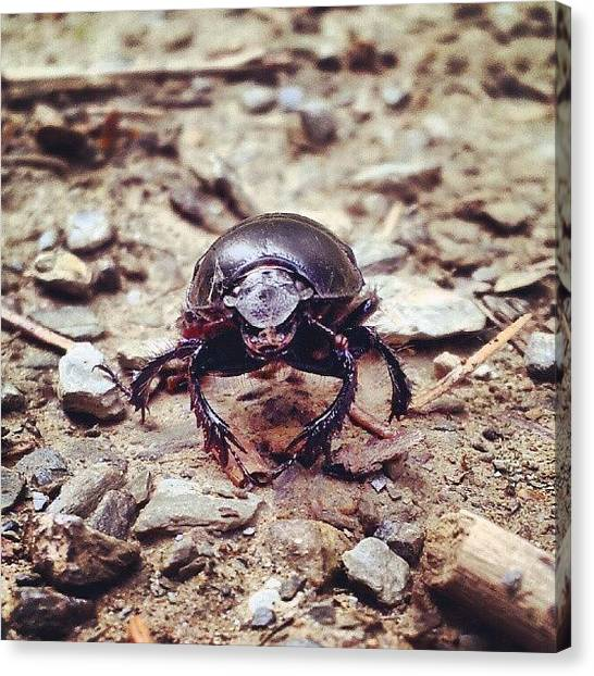 Beetles Canvas Print - #warrior #beetle #forest #wildlife by Sven Logan Todd