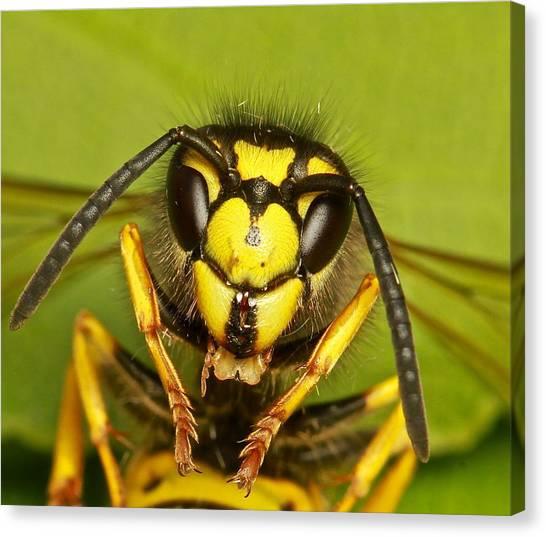 Wasp - Portrait Canvas Print by Ronald Monong