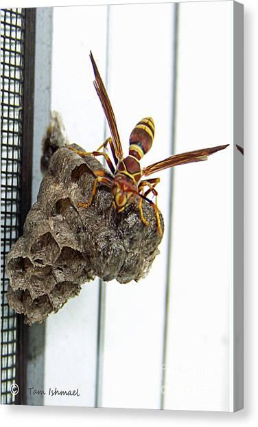 Wasp Nest Art (Page #5 of 7) | Fine Art America
